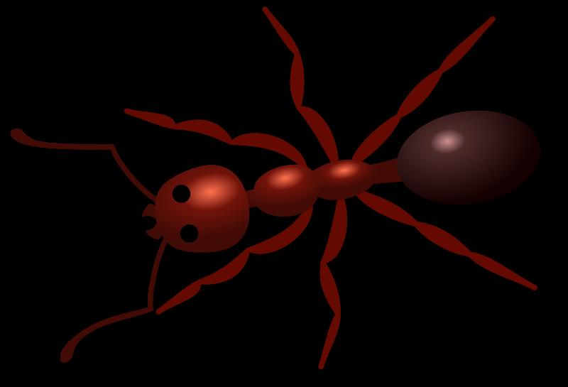 aurium Ant